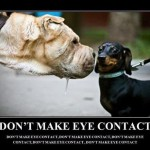 funny-dog-pictures-at-yapshow-18